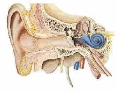 ساختار گوش میانی و داخلی
