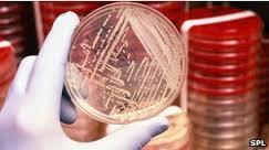 میکروبیوم انسان